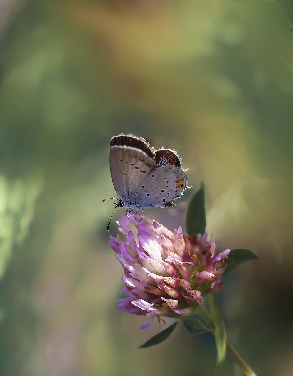 butterfly, butterflies, nature