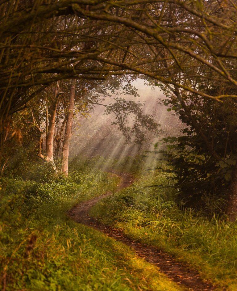 nature, away, landscape