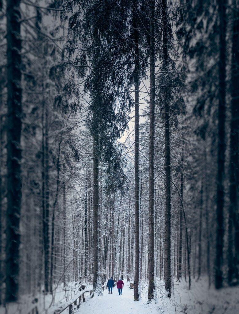 winter, pair, couple